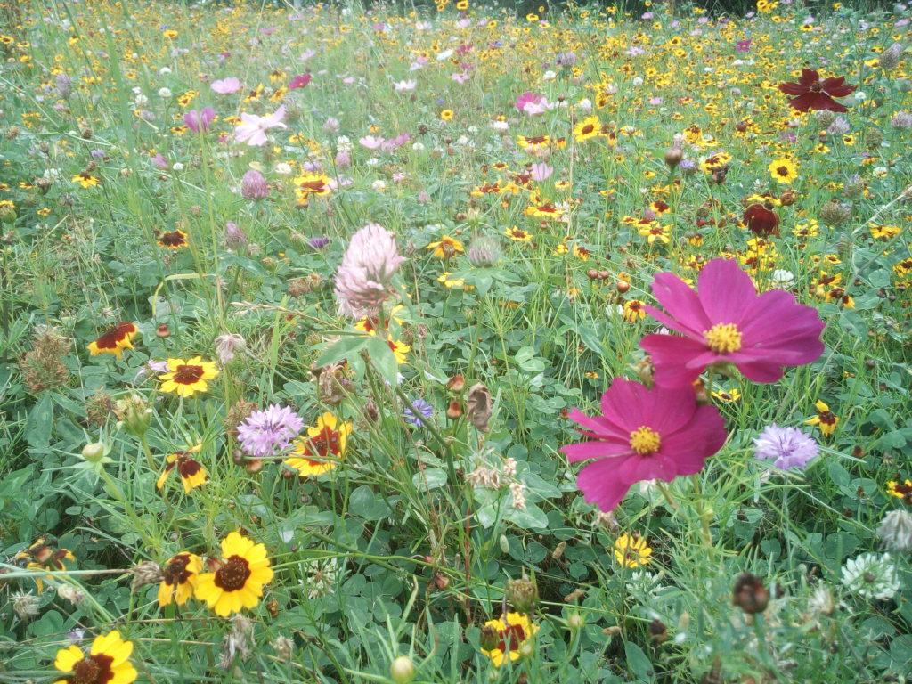 Wildblumenwiese Naturstuhl